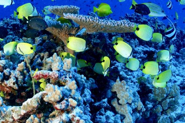 New compact boosts marine protected areas