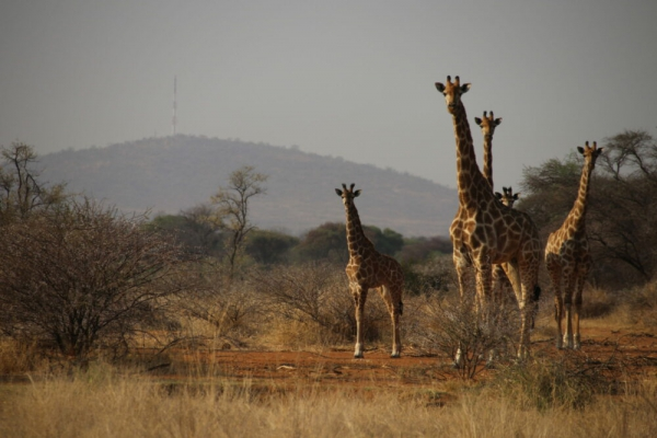 CITES tightens global wildlife trade rules
