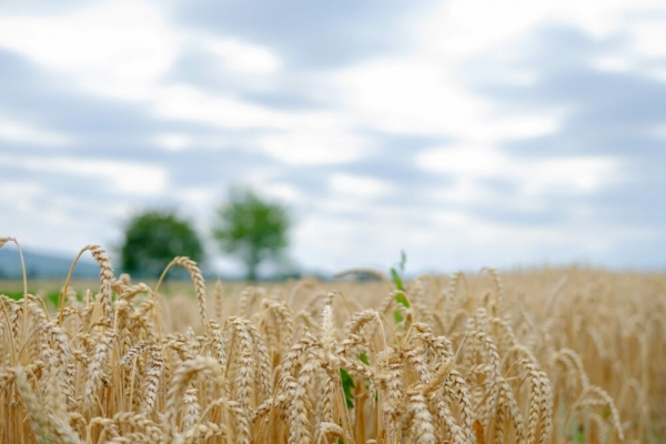 Climate report urges change in human diet