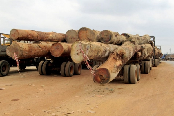 Primary forest loss up 12% despite pandemic