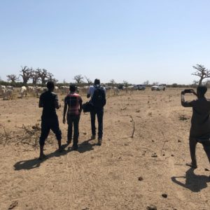 IAEA and FAO help Senegal curb tsetse fly