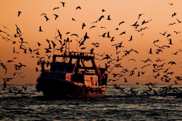WTO subsidy talks to curb overfishing drag on