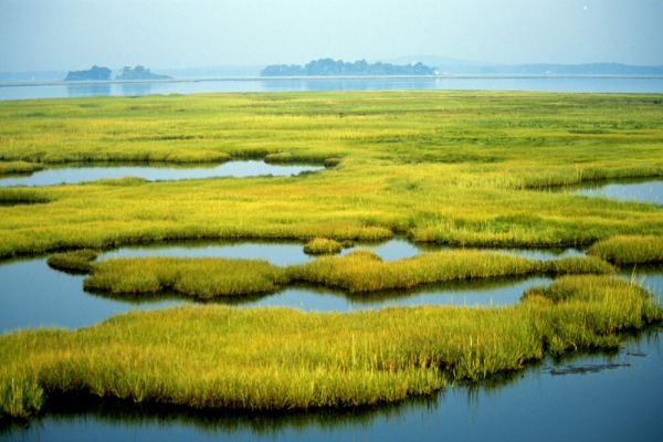 Wetlands vanishing at triple rate of forests